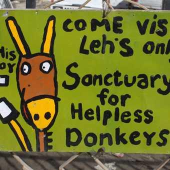Helpless donkeys