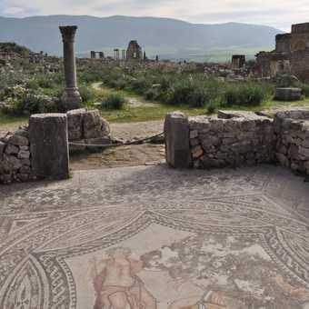 Mosaics at Volubilis