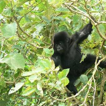 climbing trees and having fun