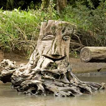 Trees fall into the river, the local Banksy had a go at this one.