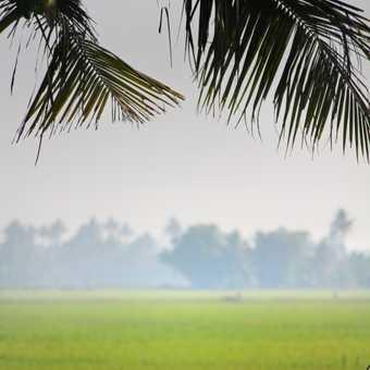 The crossing, Kerala's Backwaters