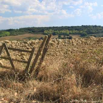 Farmland at the Fattoria