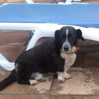 The Cortijo dogs keep an eye on the sunbeds by the pool ....