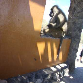 Baboon - a fast thief