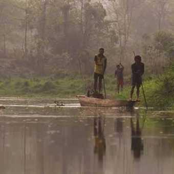 Kingfisher - Chitwan