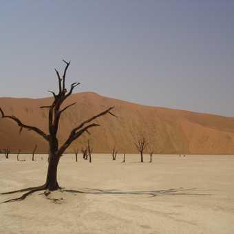 The Dead Vlei - Sossusvlei, Namibia