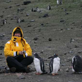 Gentoo penguins on Aitcho Island
