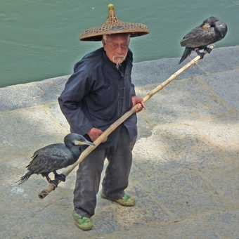 old cormorant fisher now touting for photo money