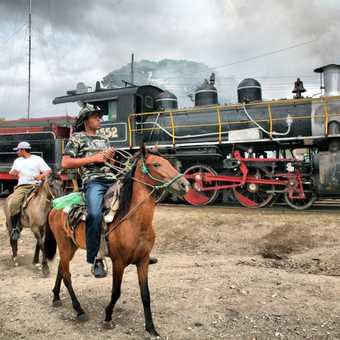 Train and horses