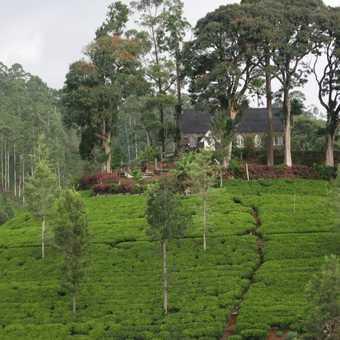 Church @ Tea gardens