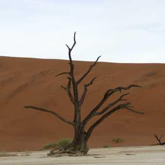 Deadvlei, Sossusvlei, Namibia