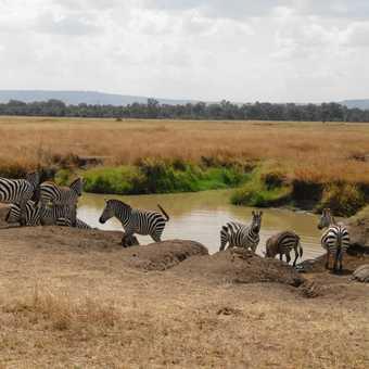 Watering Hole In The Masai Mara