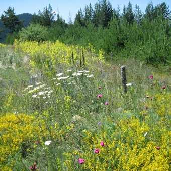 the wonderful flower meadows