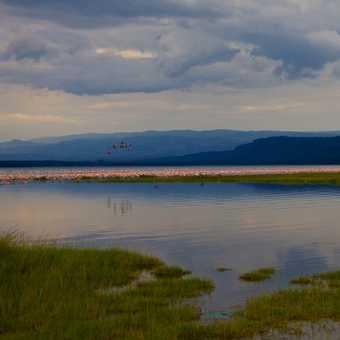 Pelican Brief, Lake Nakuru