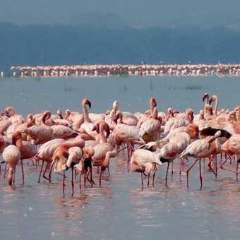 Lake of Pink