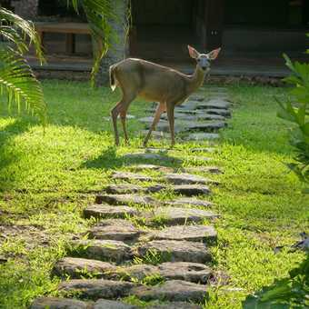 Early morning visitor