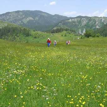 Trigrad Hay Meadows_1
