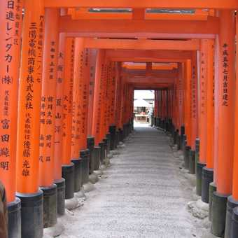 Many gates at Fushima shrine