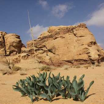 Life in the Desert  Wadi Rum
