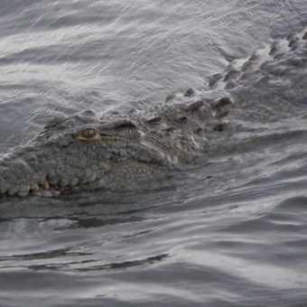 Keep on swiming please !
