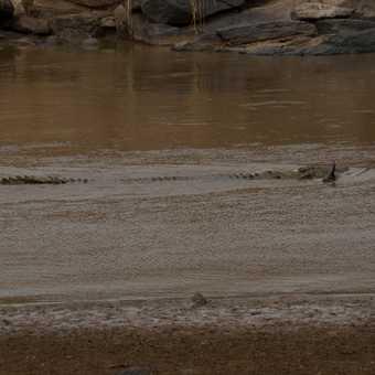 One big crocodile!