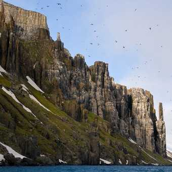 Dolomitic Cliffs - Guillemot Rookery at Cape Fanshawe