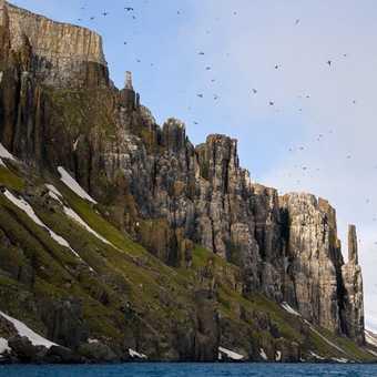 Dolomitic Cliffs - Guillemot Rookery at Cape Fanshawe
