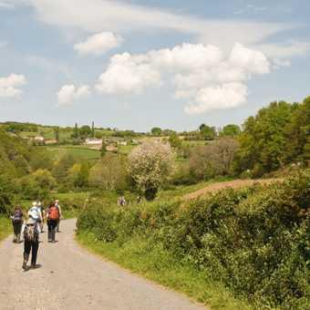 Camino View