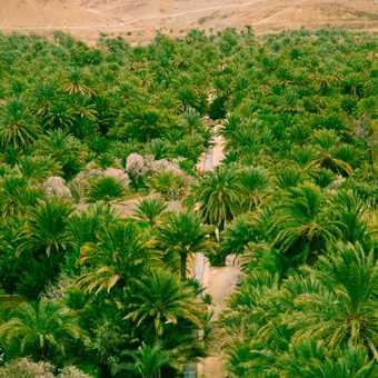 Draa valley oasis