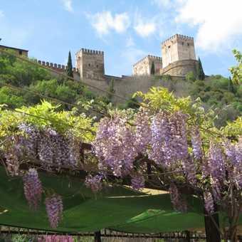 The Alhambra through Wisteria