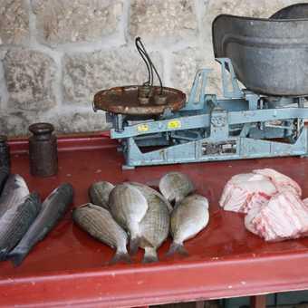 fish market Trogir