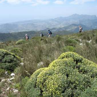 Nun's pillow  vegetation near the summit