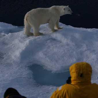 close bear 3