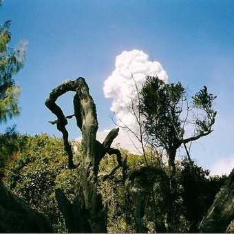 The smoke billowing top of Mt. Semeru
