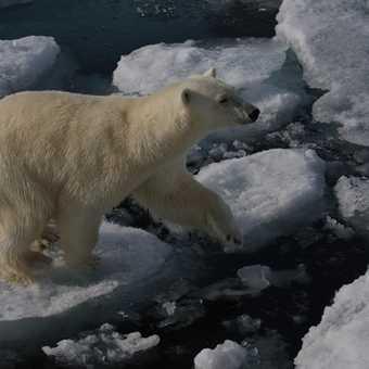 close bear 1