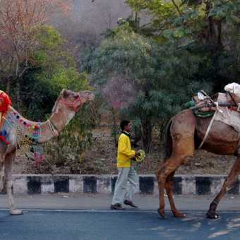 Transport Rajasthan Style