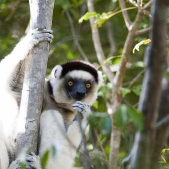 Madagascar 13