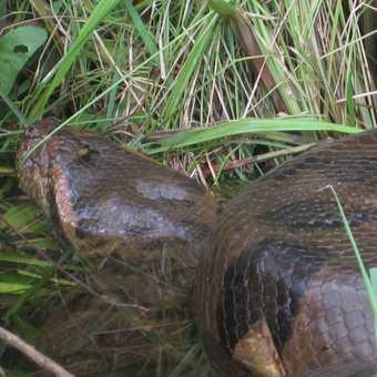 the biggest snake i have ever seen