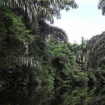 Canals in Tortuguero