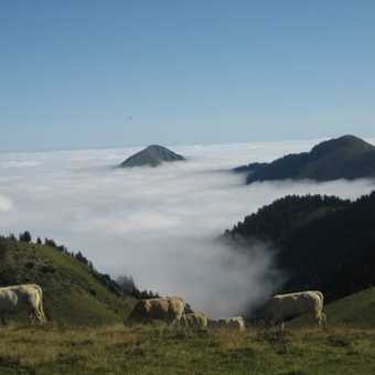 (c) Fiona: Cows in Clouds