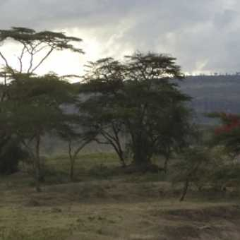 Rhinos, Nakuru.