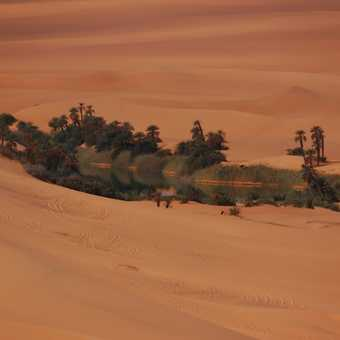 An oasis in the desert. Just like in the movies