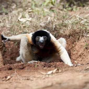 Madagascar 35