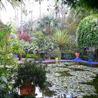 Majorelle Gardens Marrakech 3