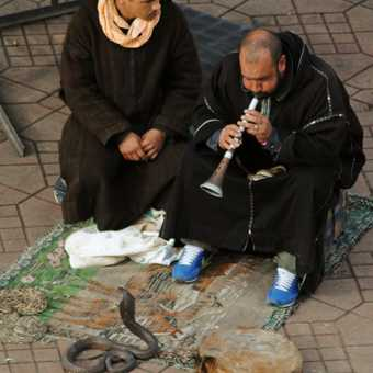 Snake charmers at work in Marrakesh
