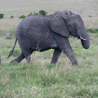 5. Elephant mother and calf. Mara