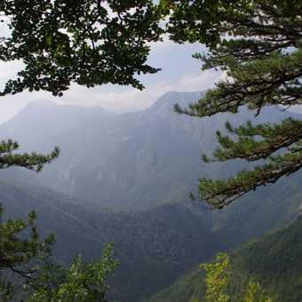 Perucica Forest