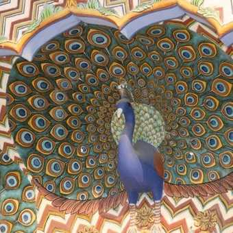 Peacock door detail, City Palace Jaipur