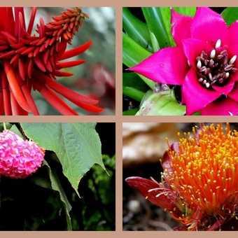 Plant Collage Botanical Gardens Funchal