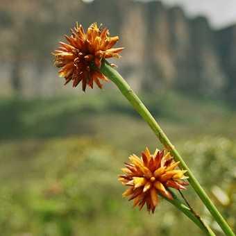 Some savannah flora